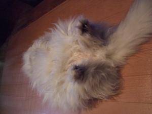 猫と一緒-20111222_01P