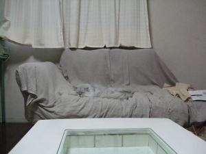 猫と一緒-20111206_02P