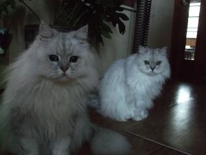 猫と一緒-20110920_07P