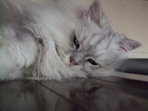 猫と一緒-20090821_22P
