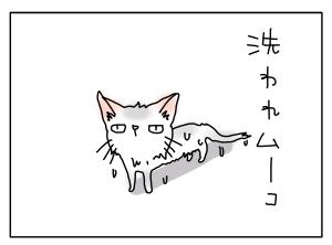 猫と一緒-20110614_01