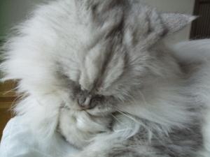 猫と一緒-20091223_05P