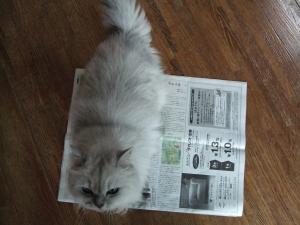 猫と一緒-20081231_01