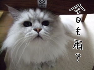猫と一緒-20100616_01P