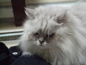 猫と一緒-20130611_01P