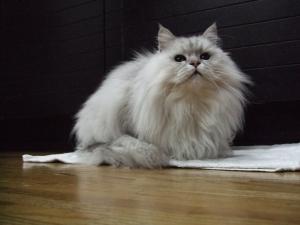 猫と一緒-20111227_04P