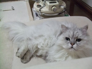 猫と一緒-20111207_01P