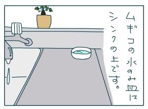 猫と一緒-20090926_01