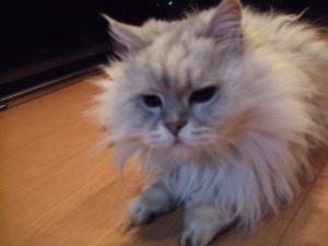猫と一緒-20120308_07P