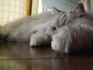 猫と一緒-20091028_03P
