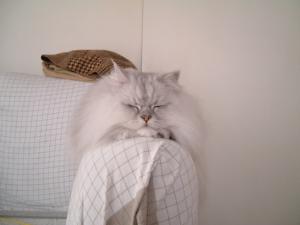 猫と一緒-20080117_2