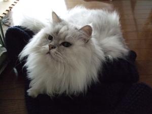 猫と一緒-20111101_07P
