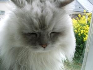 猫と一緒-20110512_18P