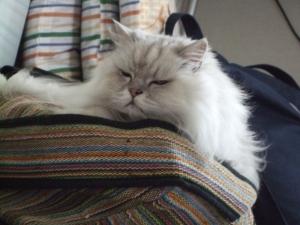 猫と一緒-20130725_12P