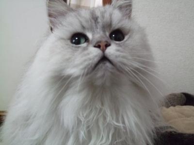 猫と一緒-20130213_02P