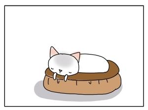 猫と一緒-20110116_02