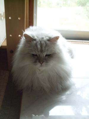 猫と一緒-20100625_12P