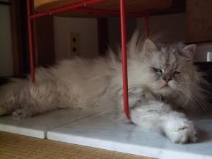 猫と一緒-20120726_03P