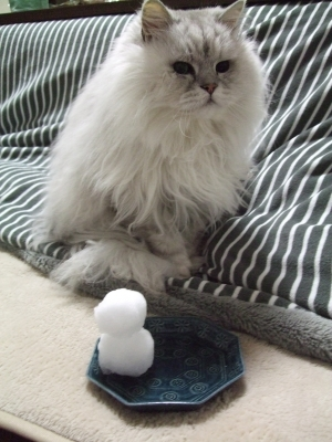 猫と一緒-20130115_02P