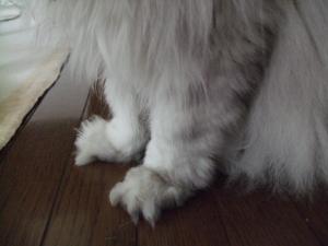 猫と一緒-20110715_05P