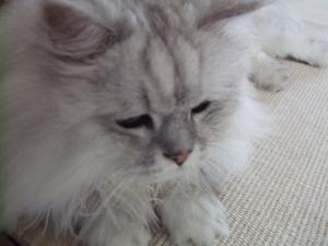 猫と一緒-20090824_09P