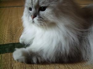 猫と一緒-20110801_06P