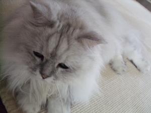 猫と一緒-20090824_10P