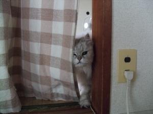 猫と一緒-20120428_02P