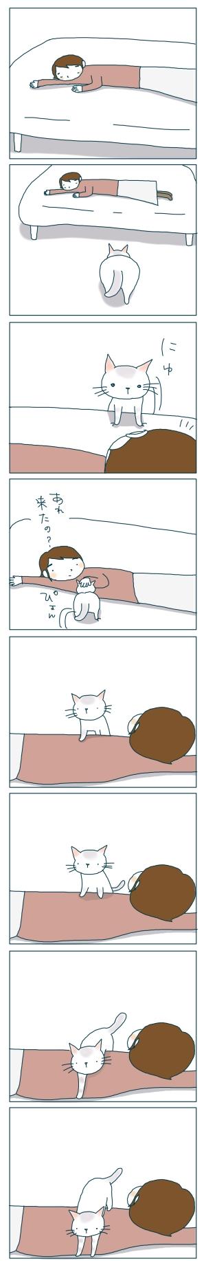 猫と一緒-20081217-01