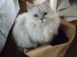 猫と一緒-20111101_06P