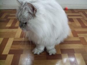 猫と一緒-20091025_01P