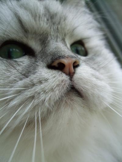 猫と一緒-2090915_01P