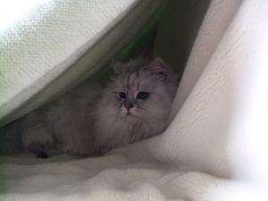 猫と一緒-20110315_01P