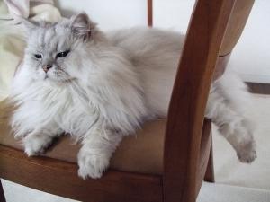 猫と一緒-20110310_01P