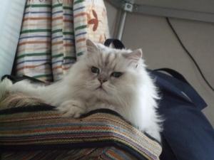 猫と一緒-20130725_11P