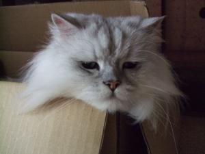 猫と一緒-20090713_10P