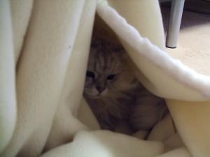 猫と一緒-20081231_03