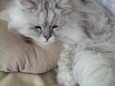 猫と一緒-20090129-05