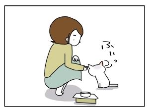 猫と一緒-20101108_08