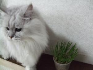 猫と一緒-20101119_03P