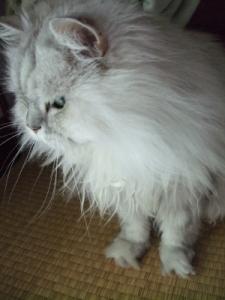 猫と一緒-20110715_03P