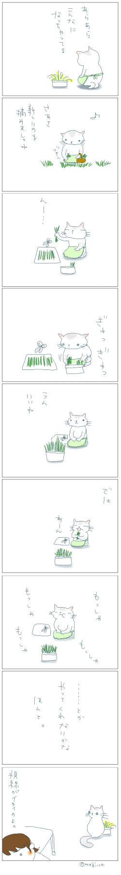 猫と一緒-20080321
