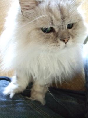 猫と一緒-20120905_01P