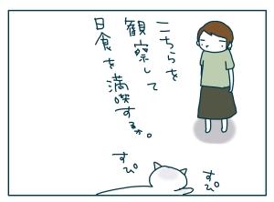猫と一緒-20090722_04