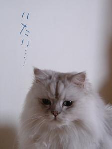 猫と一緒-20080122_2