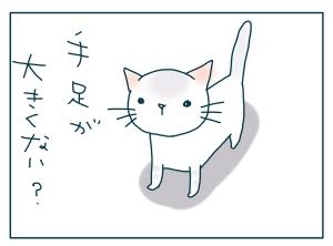 猫と一緒-20090522_03