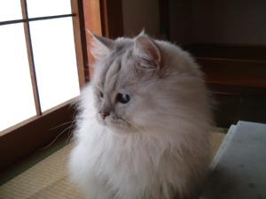 猫と一緒-20071026_2