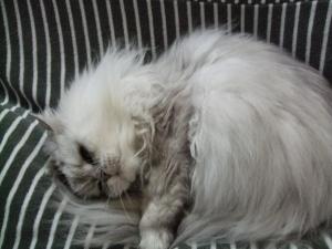 猫と一緒-20121210_03P