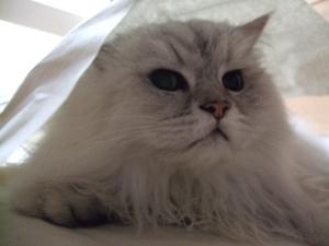 猫と一緒-20110701_03P