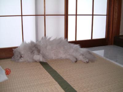 猫と一緒-20070620_2
